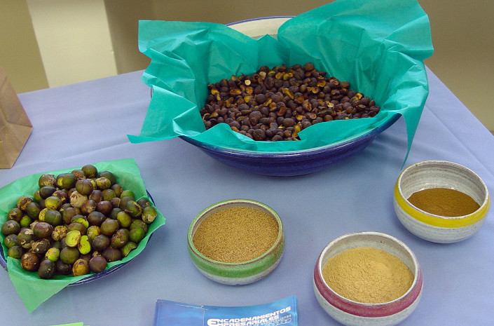 Fresh and dried Maya Nut seeds and flours