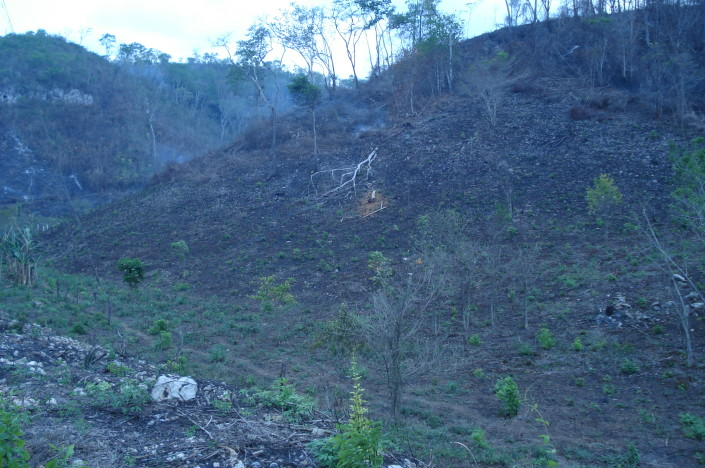 Farmers burning Maya Nut forest to plant corn in Peten, Guatemala. Erika Vohman photo