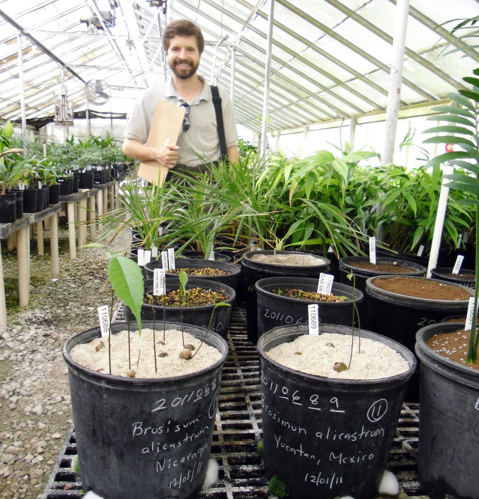 Chad Husby of Montomery Botanical Center with Nicaraguan Maya Nut seedlings