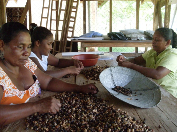 Photo Christine Woda, 2010. Miskita women selecting Maya Nut seed.